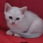 Underbar kattunge
