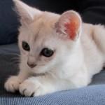 Älskade kattunge!