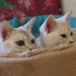 Katter med koll...