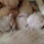 Mysiga kattungar