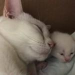Moderskärlek!!