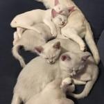 MYCKET katter...
