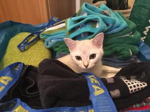 Matte behöver hjälp med tvätten!