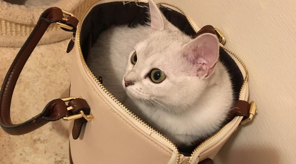Katter på och i väskan...