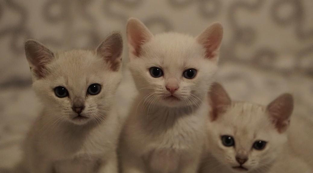Jardin, Jasper och Juniskär