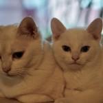 Tassali och Jasper