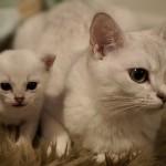 Ligovskij är trygg med mamma Nousie
