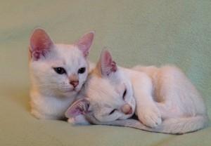 Älskade syster